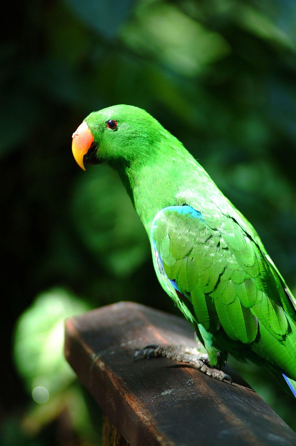 small tropical birds Tropical birds from Australia are