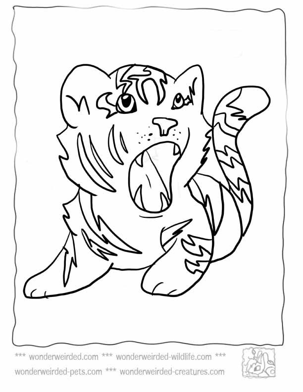 baby tigers cute tigers and coloring pages on pinterest