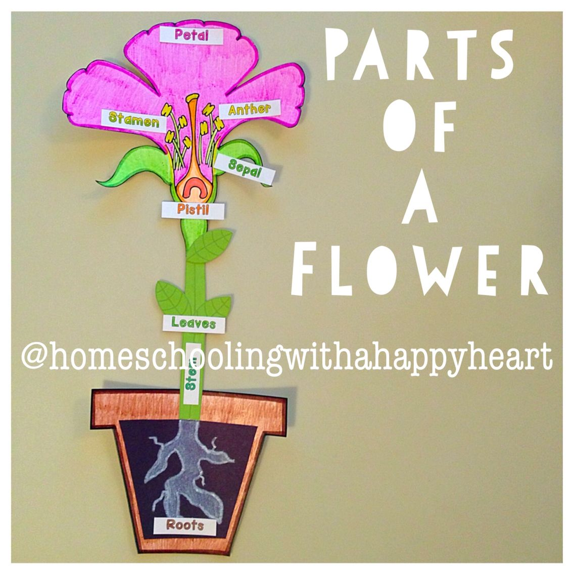 CC Science… Weeks 9, 10, and 11 (Parts Of A Flower