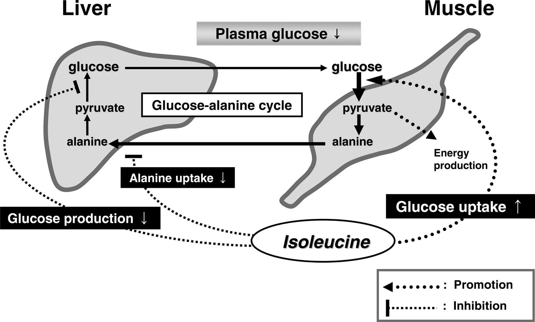 Citric Acid Cycle Diagram Complete