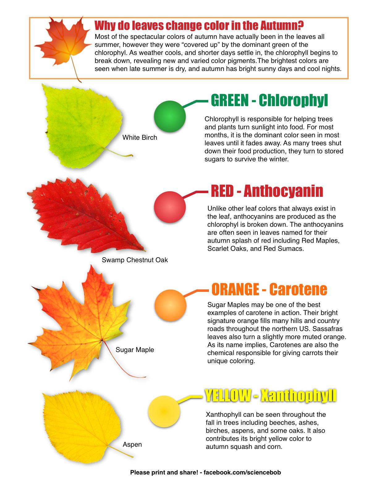 Why Do Leaves Change Color In The Autumn From Science Bob S Blog