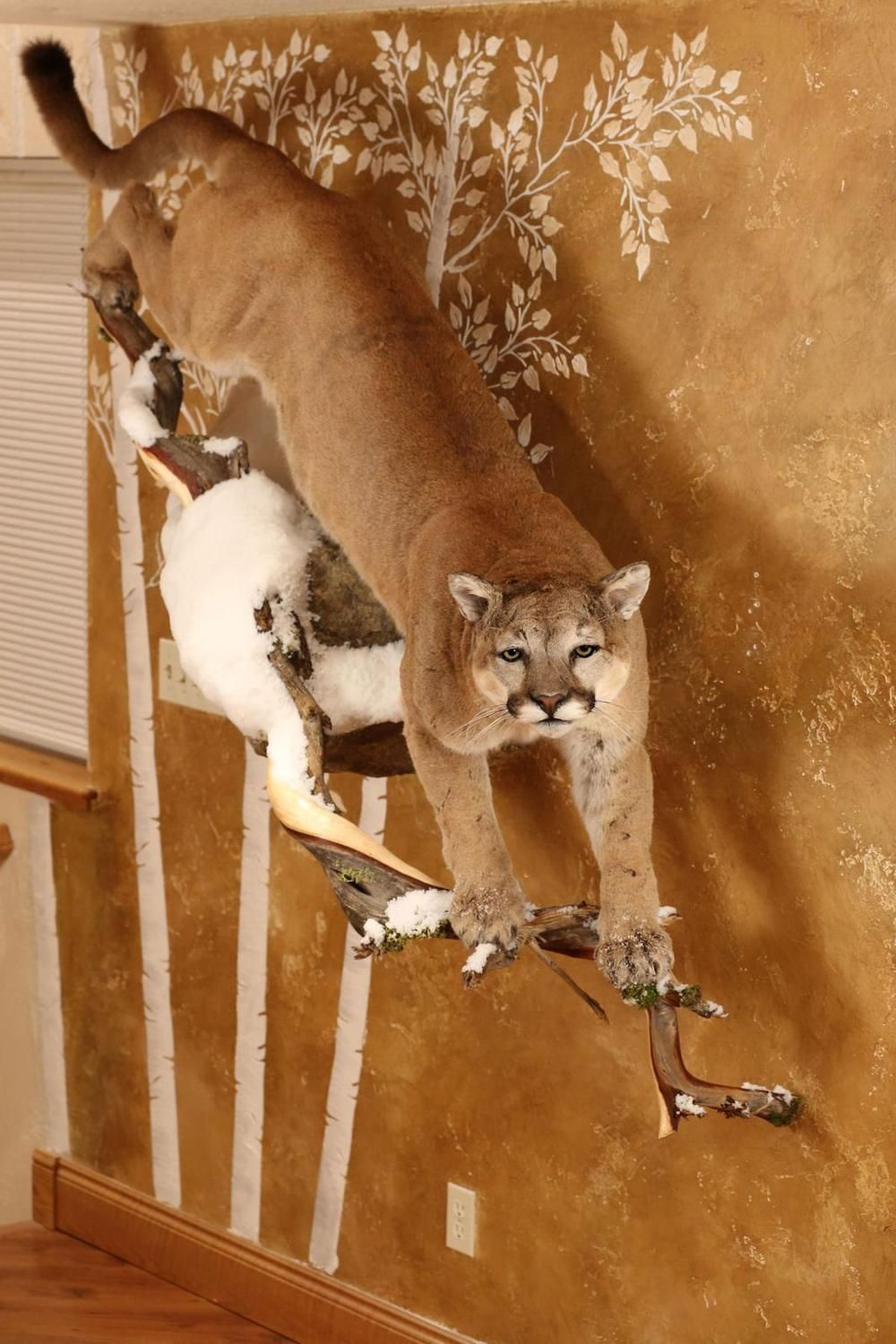 mountain lion taxidermy mount Google Search Taxidermy