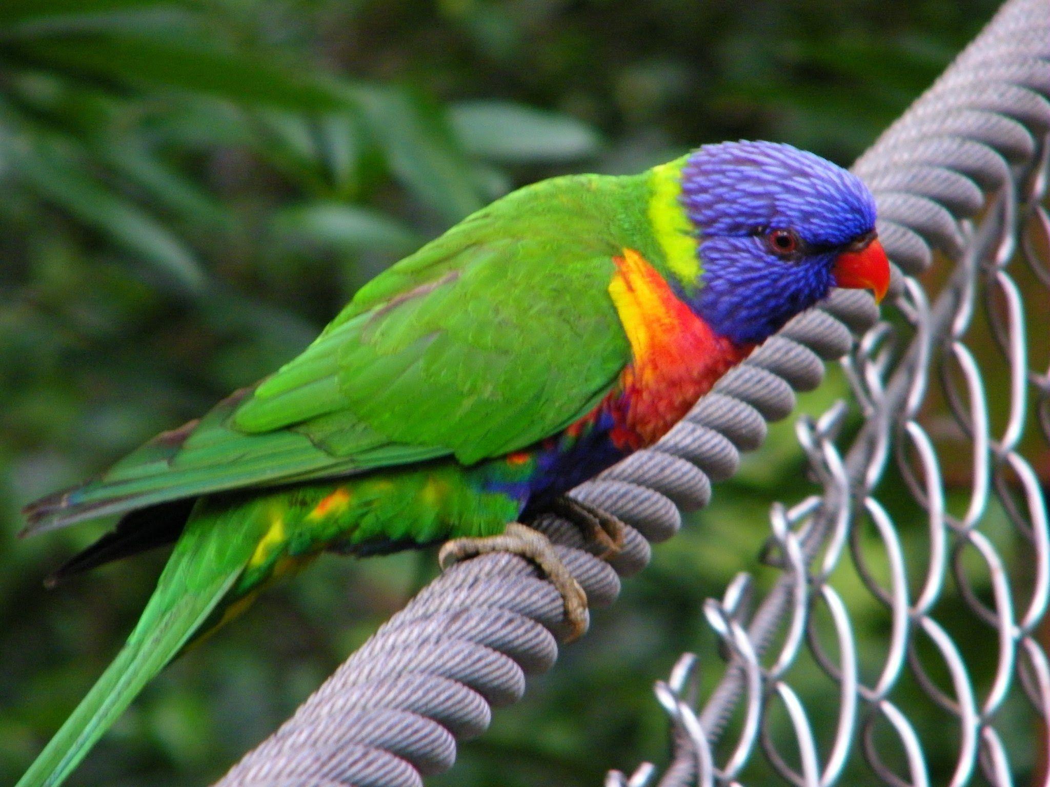 Australian Birds The Best Documentary VIDEOCLIP