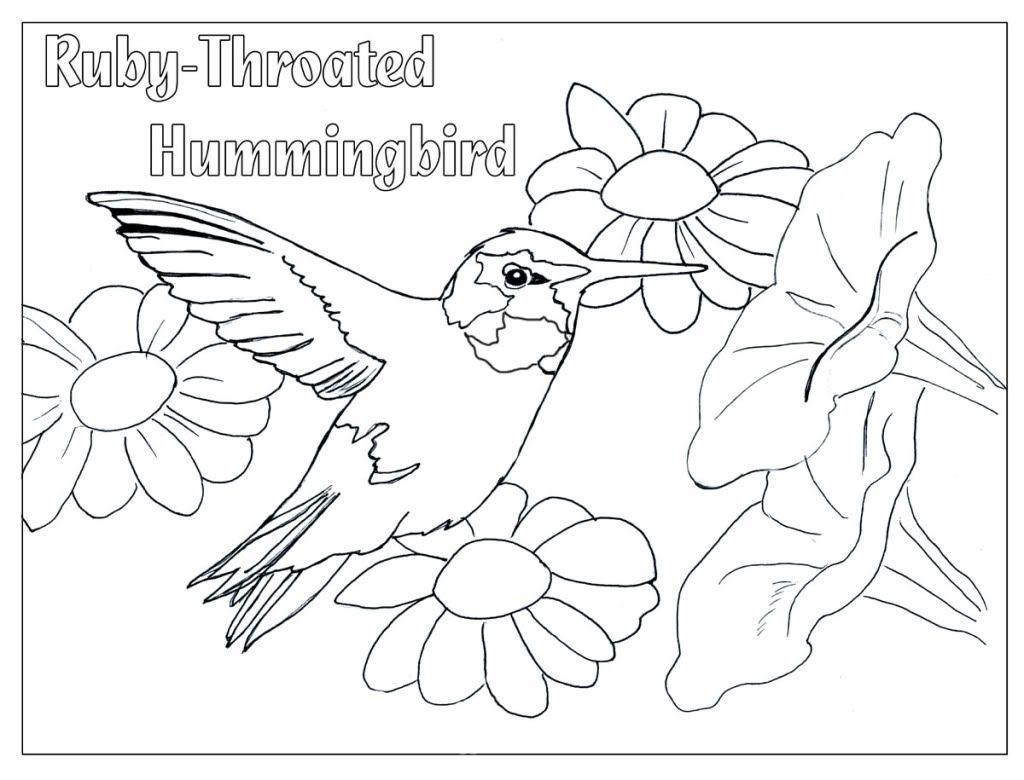 Hummingbird Color Page