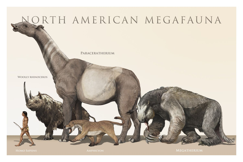 pleistocene rewilding Google Search Strange Creatures