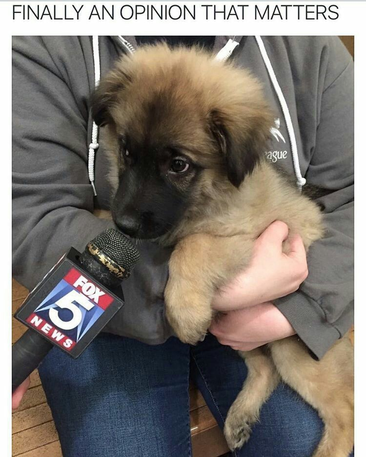 Alcohol Inks on Yupo Dog, Animal and Memes