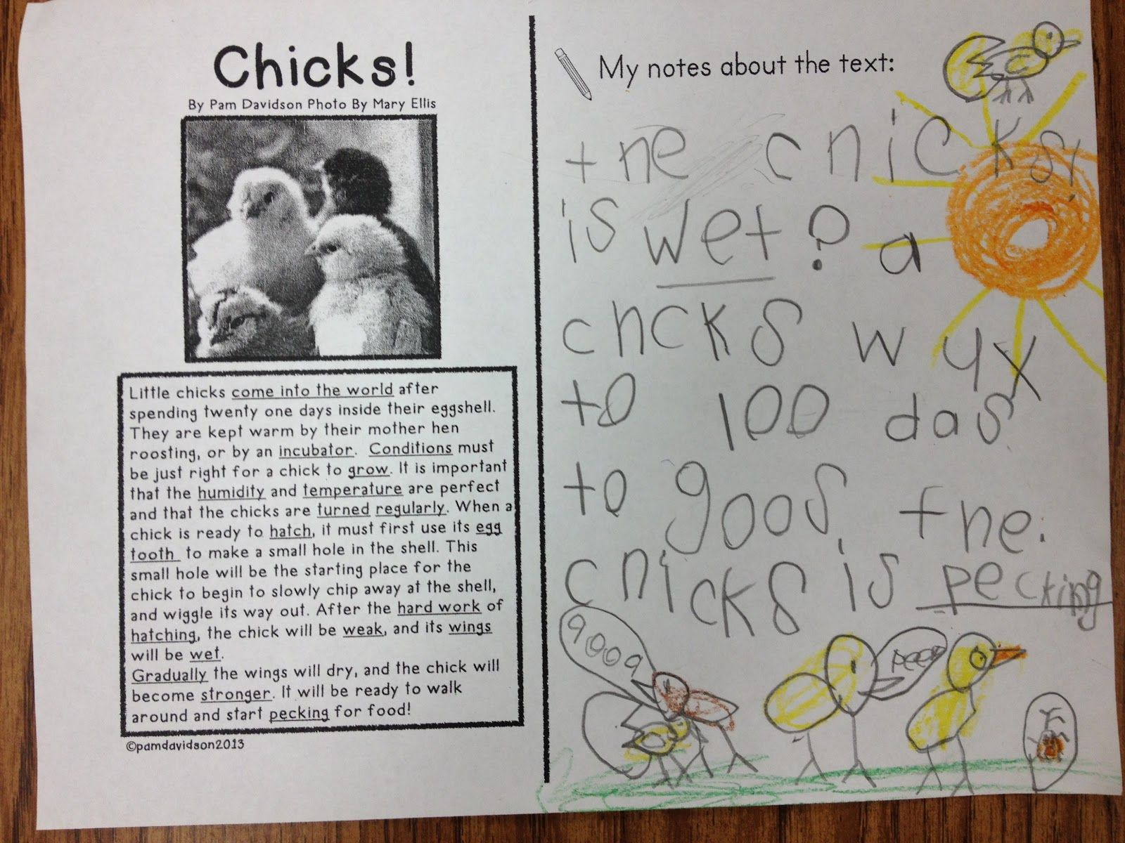 Little Bird Kindergarten Blog Post Close Reading Of