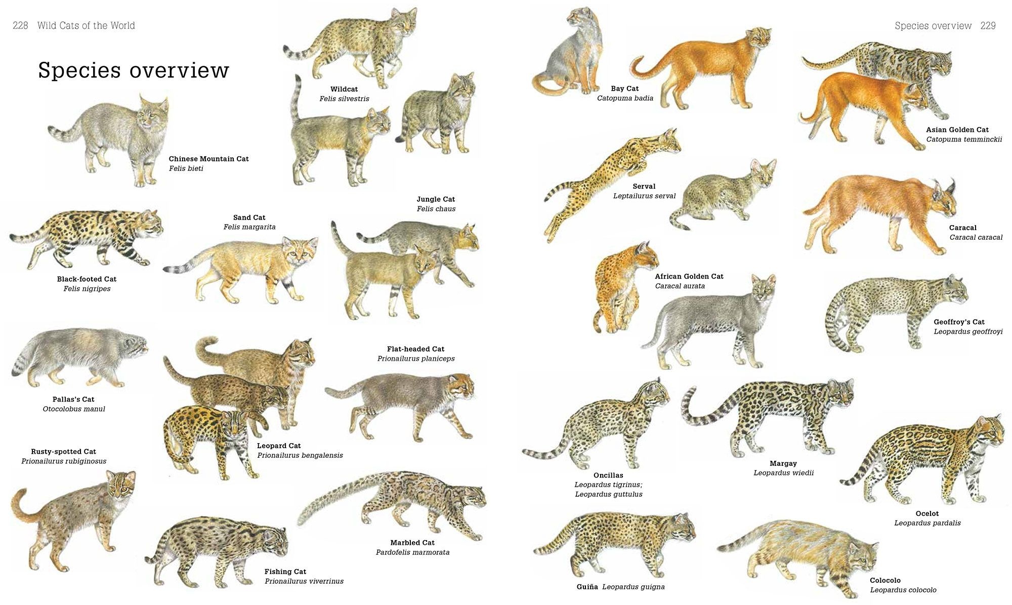 Amusing Kinds Of Cats List Also Secrets Of The World S 38