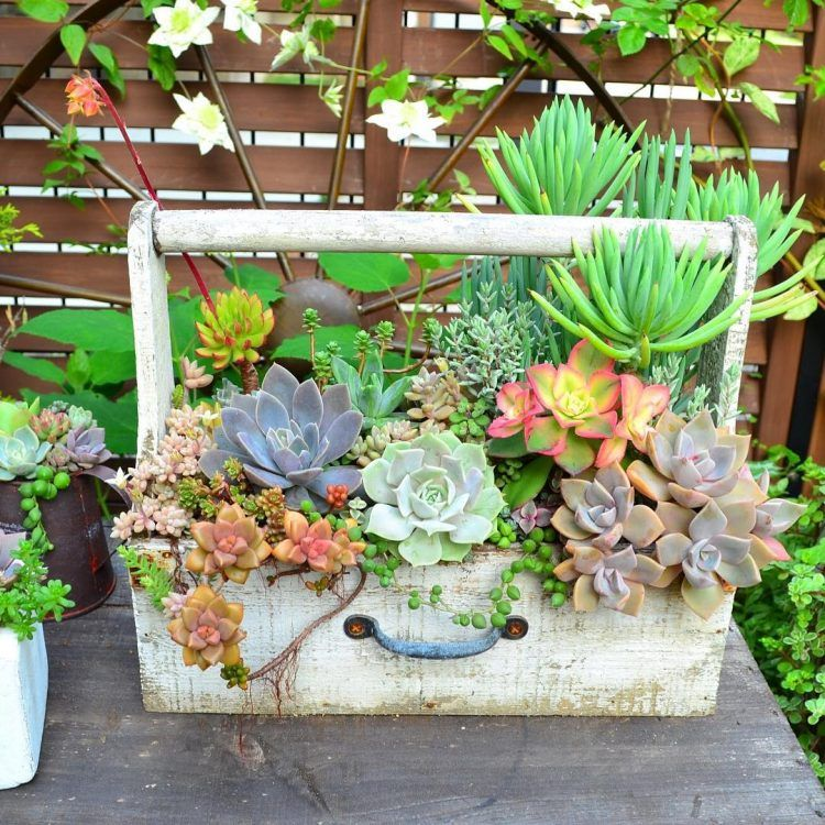 Best 25 Succulent Garden Ideas Ideas On Pinterest Succulent Outdoor Yard And Cinder Block Garden