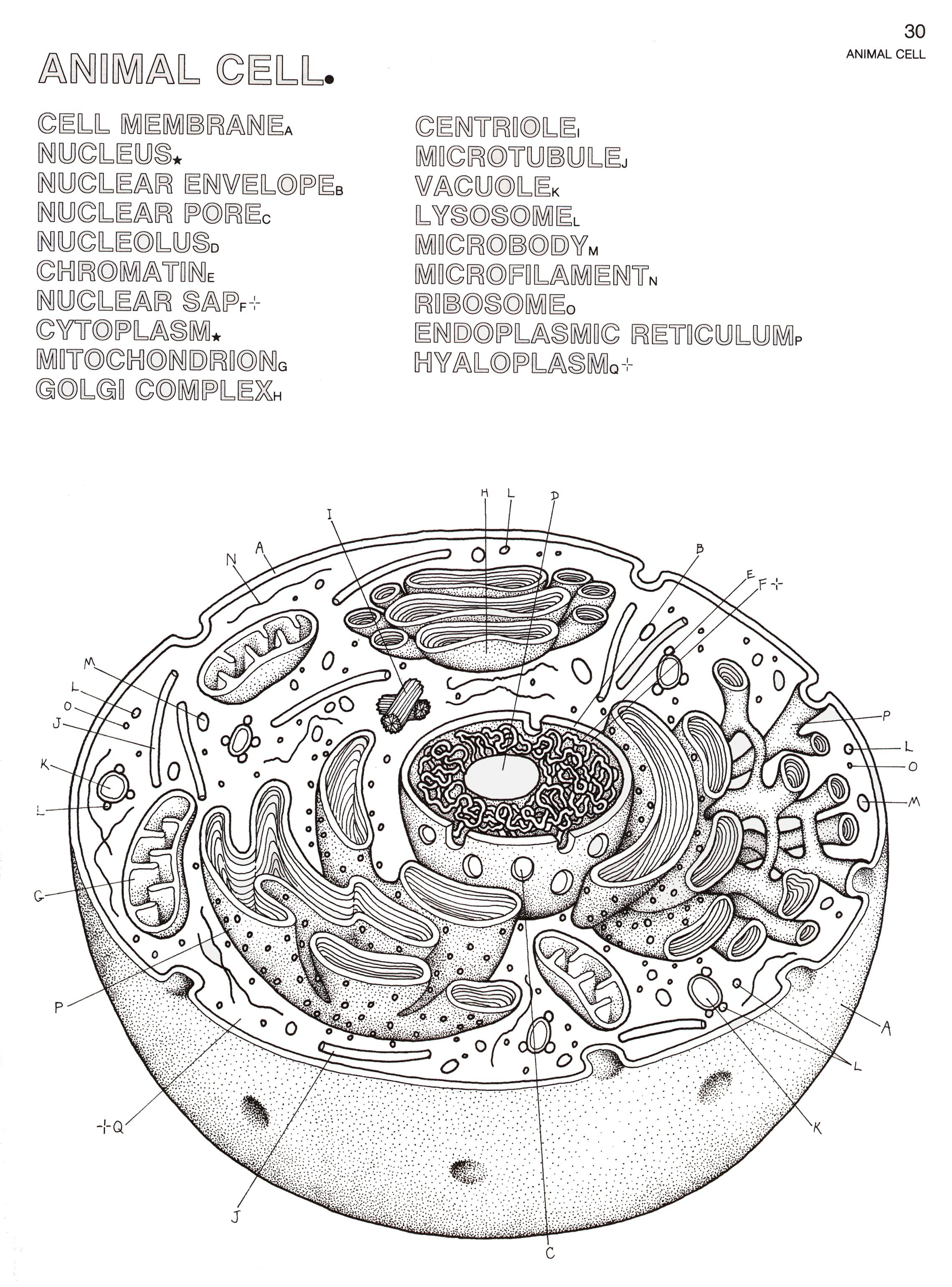 Biology Coloring Pages Biology Coloring Book
