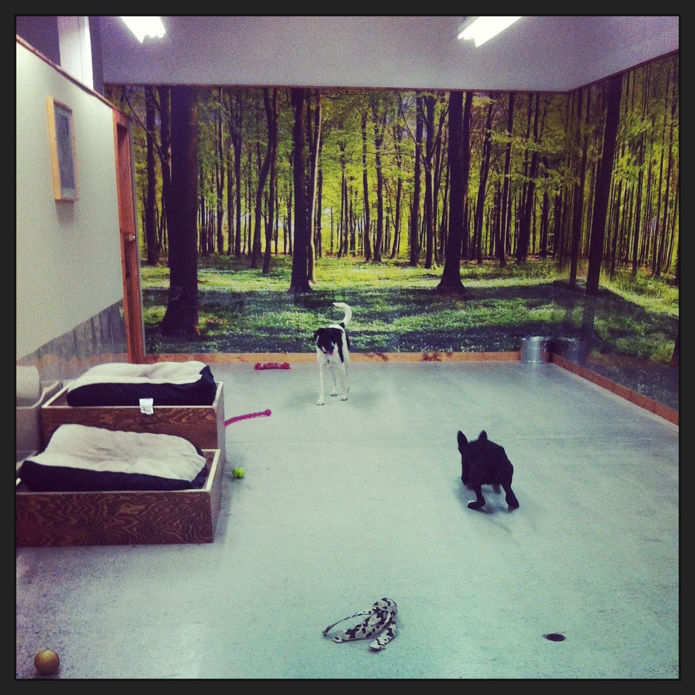 murals decorative painting Doggie daycare