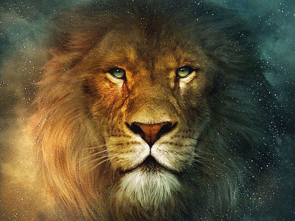 chronicles of narnia desktop wallpaper   randon   pinterest   lion