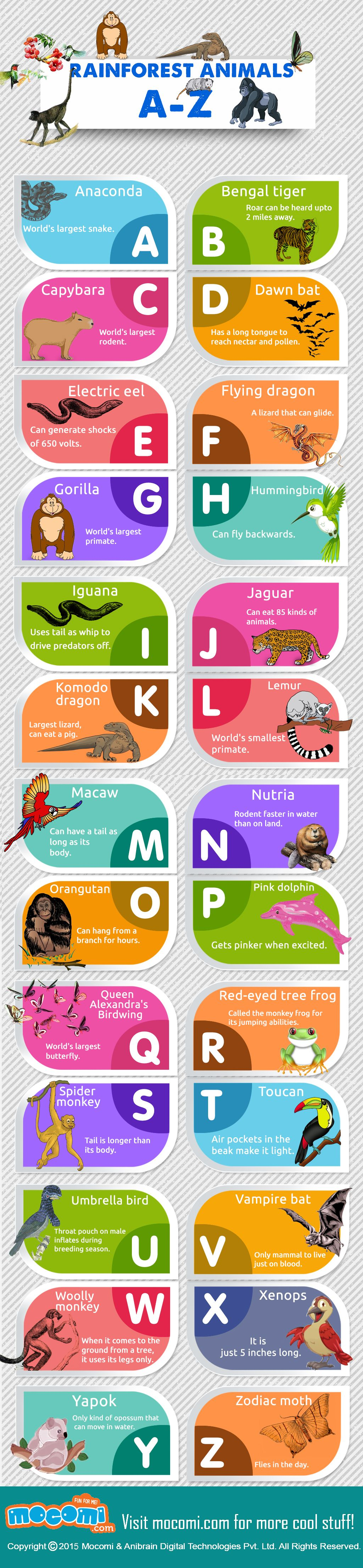List of Rainforest Animals Rainforests are located