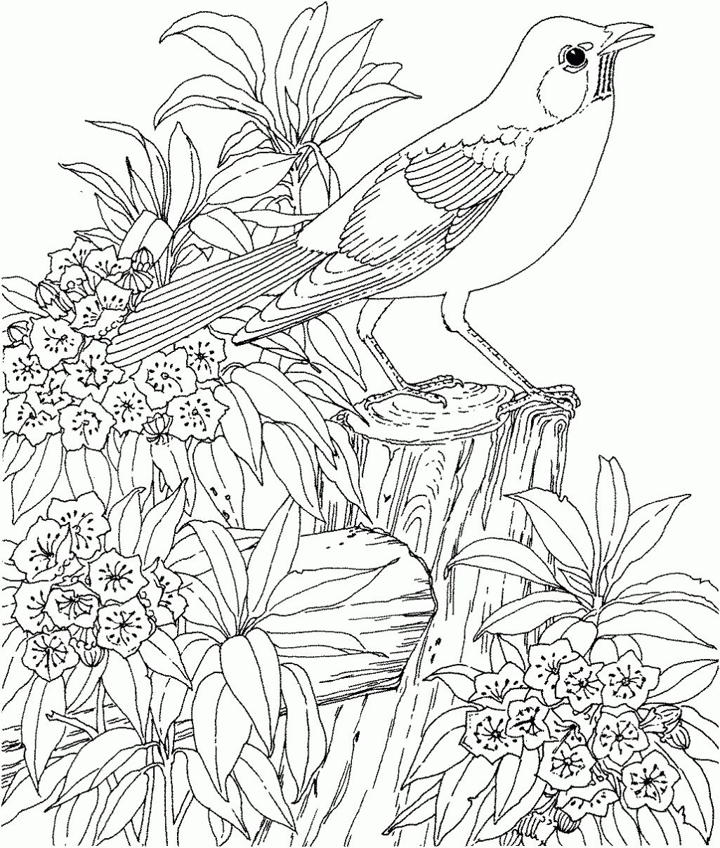 Nature Coloring Pages For Adults Coloring Pages Of Backyard Free
