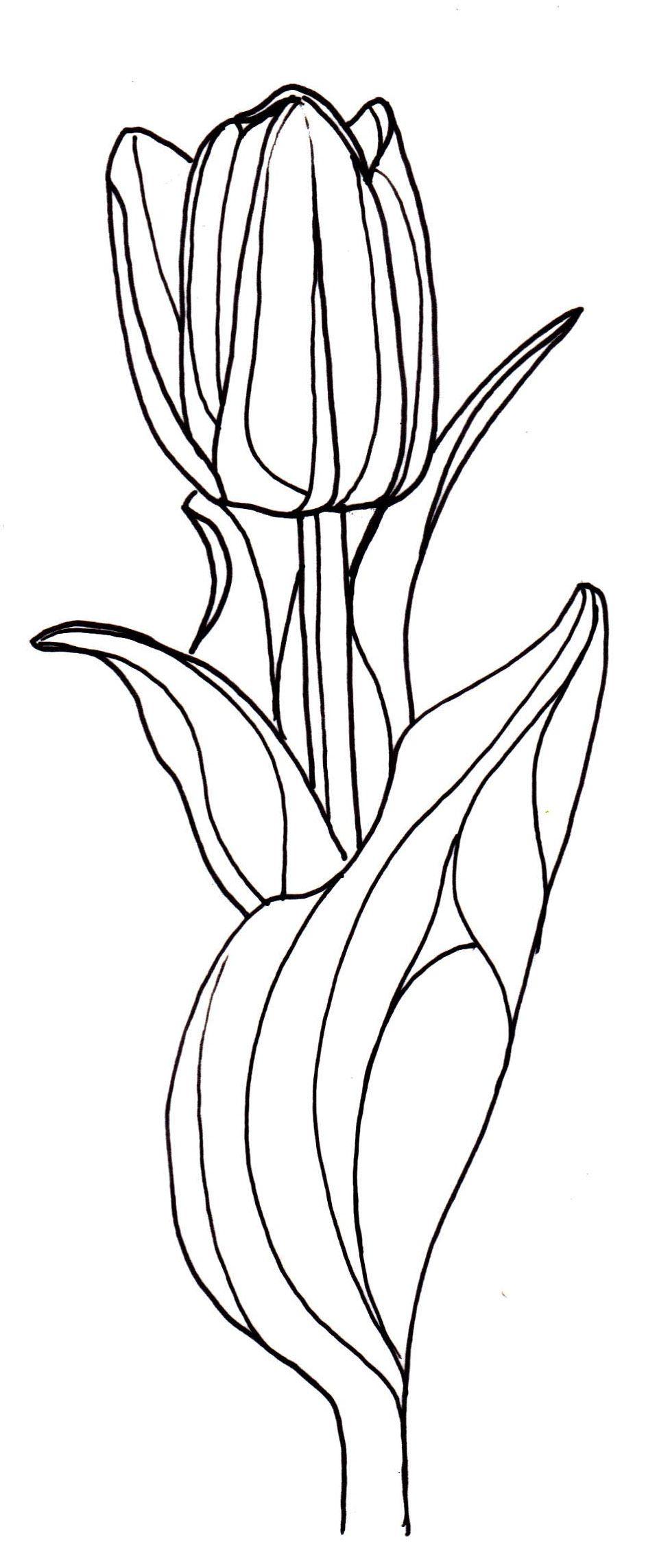 line drawing flowers tulip Drawings Pinterest
