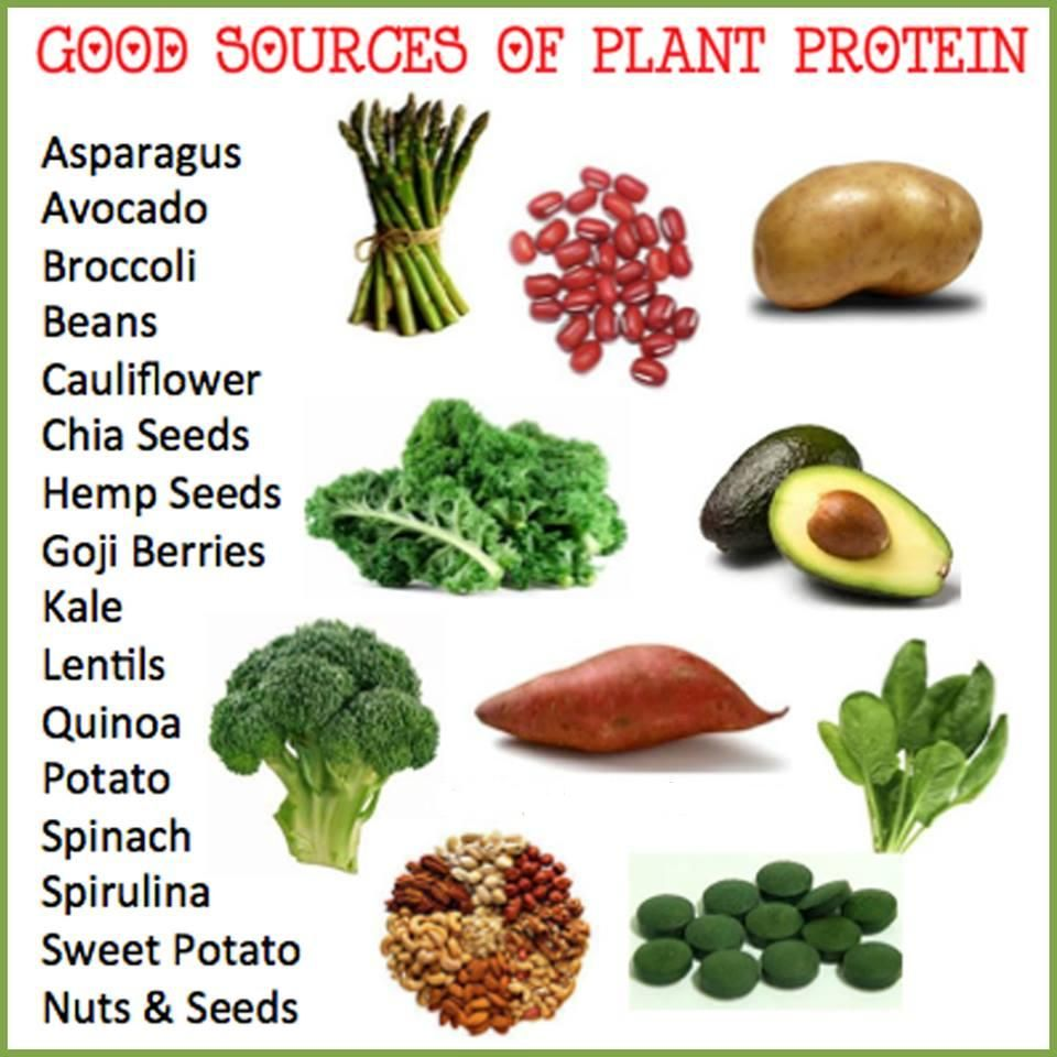 Protein Foods for Vegetarians Protein Foods It is