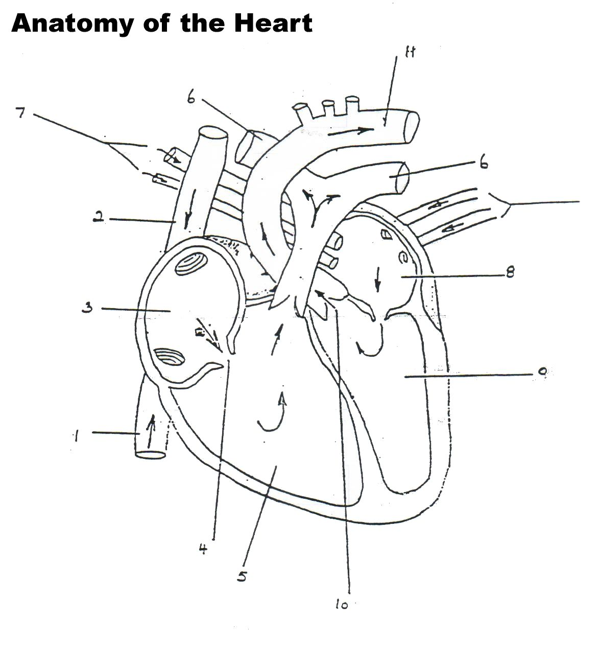 Free Worksheet Diagram Of The Heart Worksheet Phinixi – Heart Diagram Worksheet