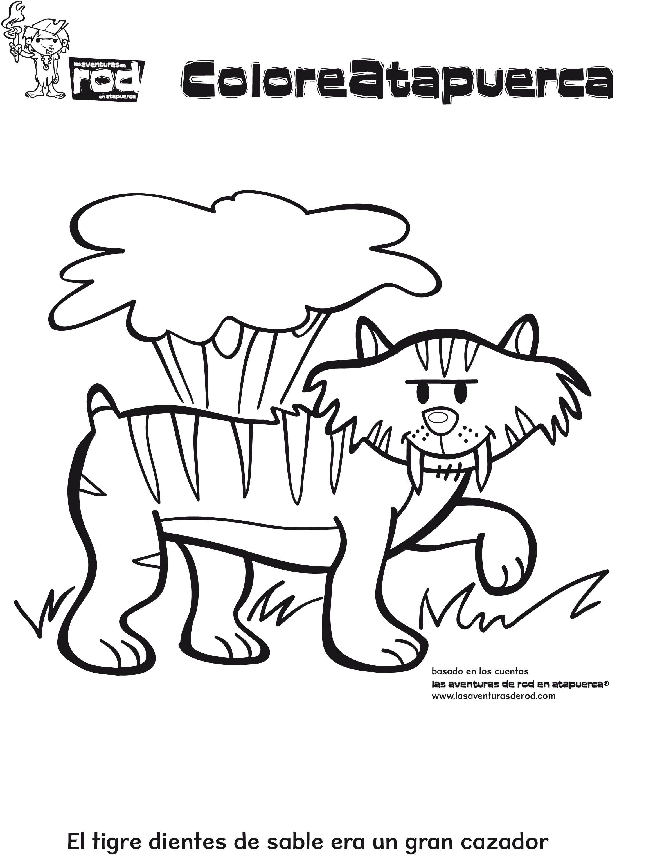02 Dibujos Para Colorear Animales Tigre