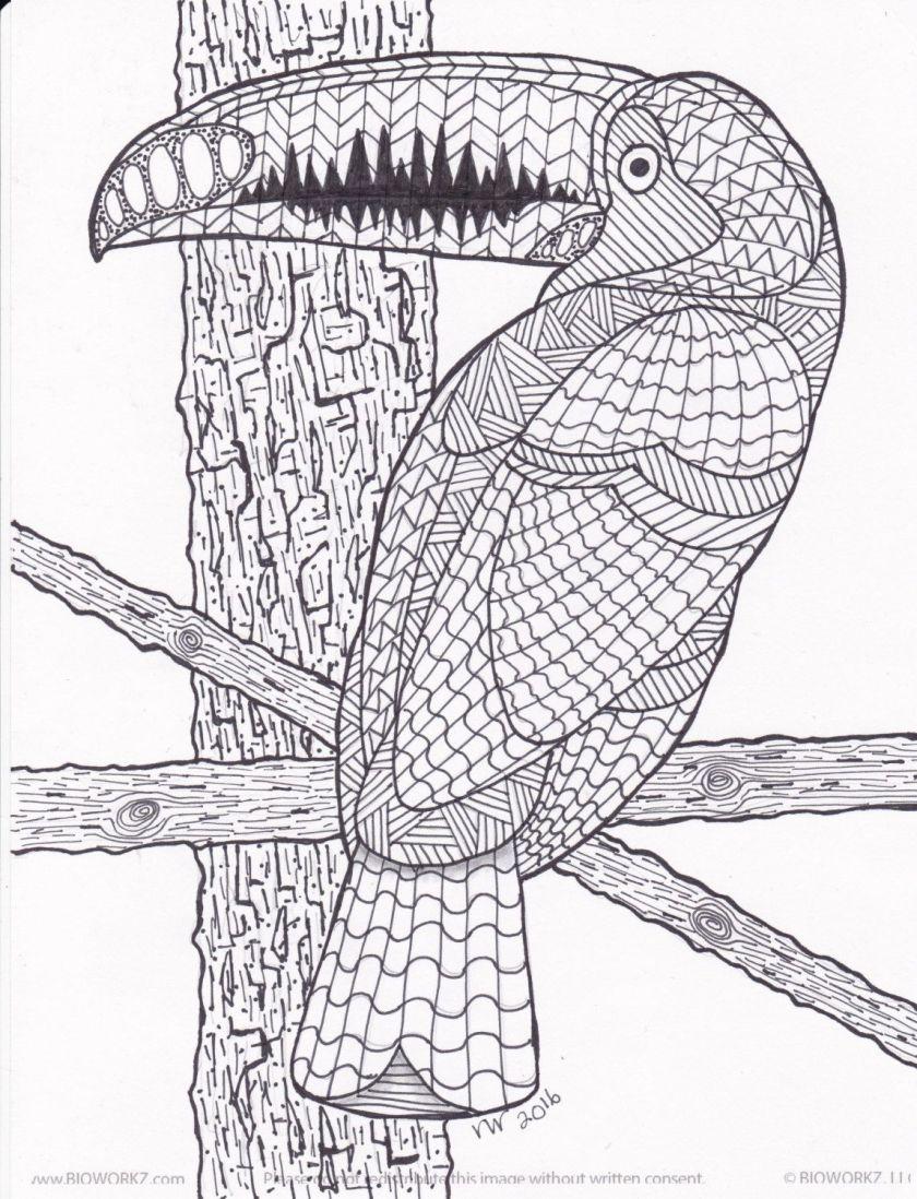 toucan / exotic bird zentangle coloring page