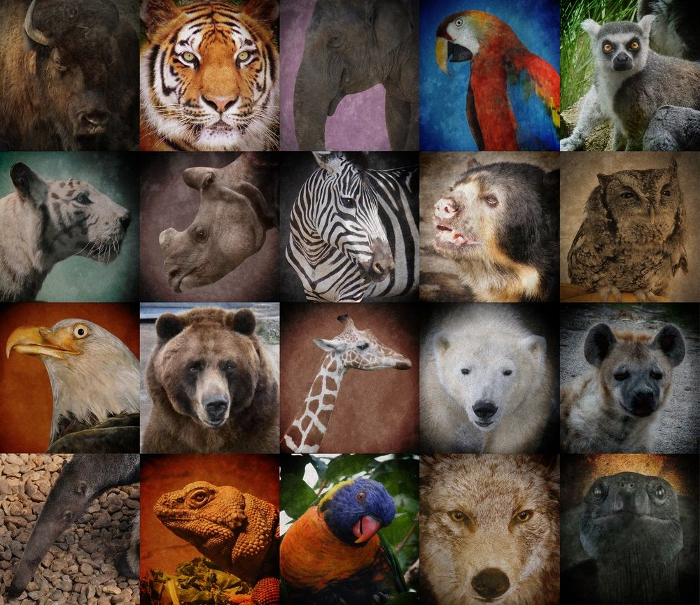 Many of the animals pictured here—from the American bison
