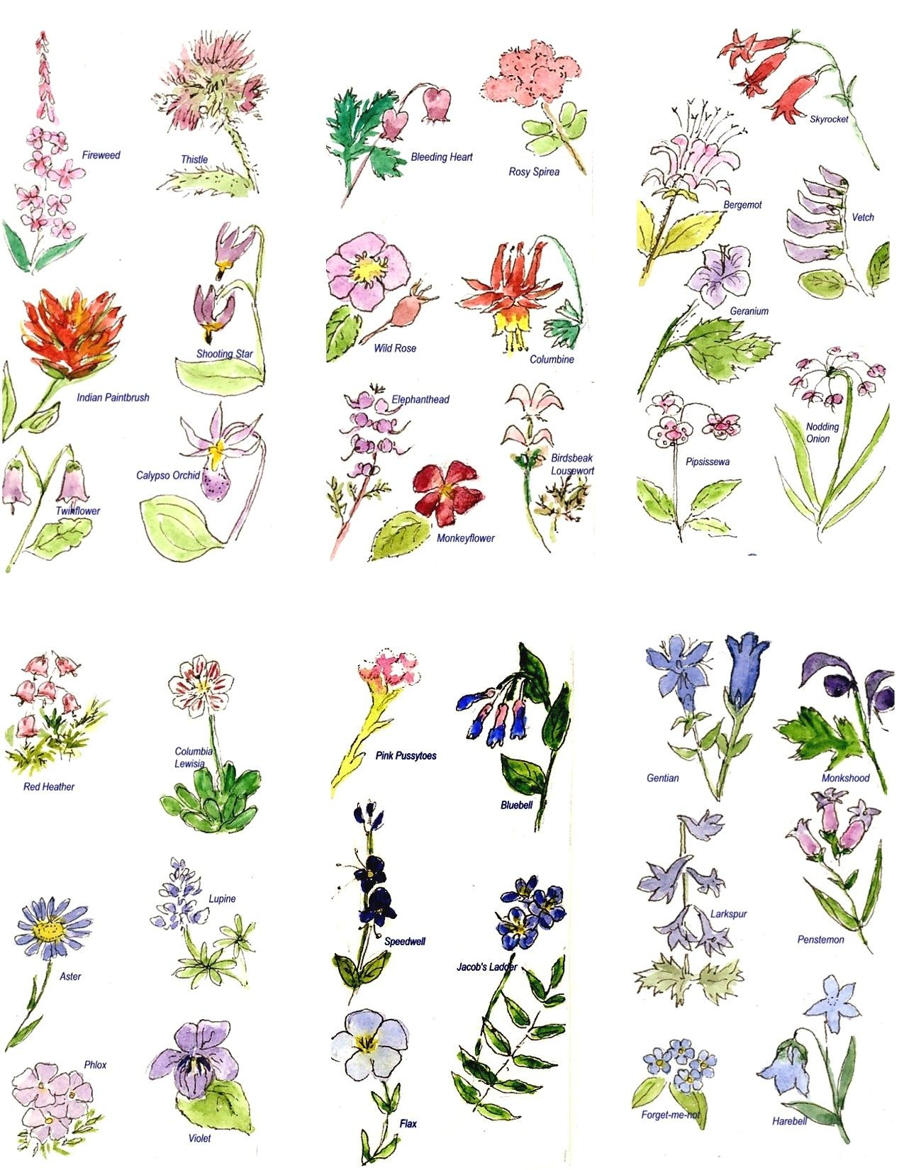 pictures of flower names Google Search FLOWER POSTS