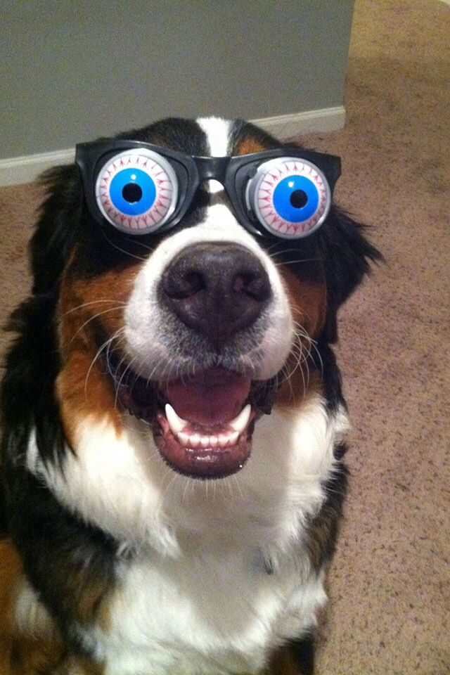 My eyes are dilated! Funny Dogs!! Pinterest Dog