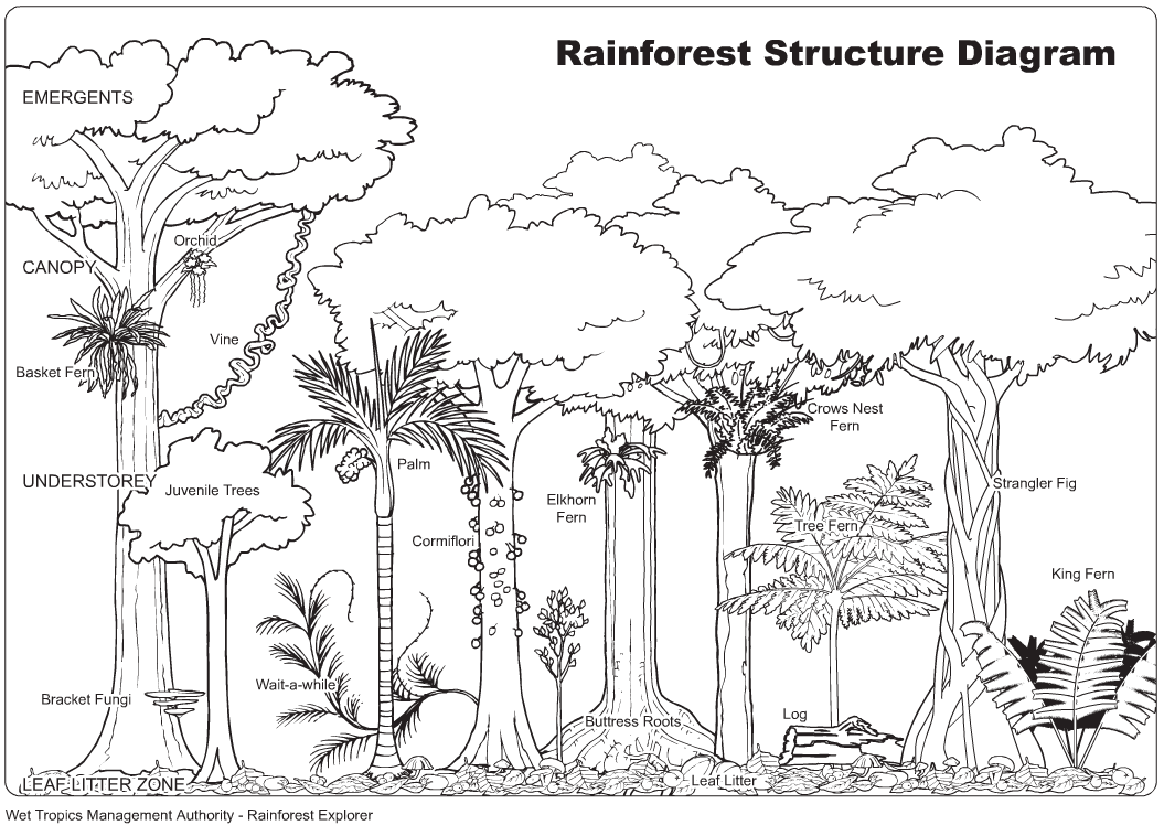 Rain Forest Coloring Sheet Yahoo Image Search Results