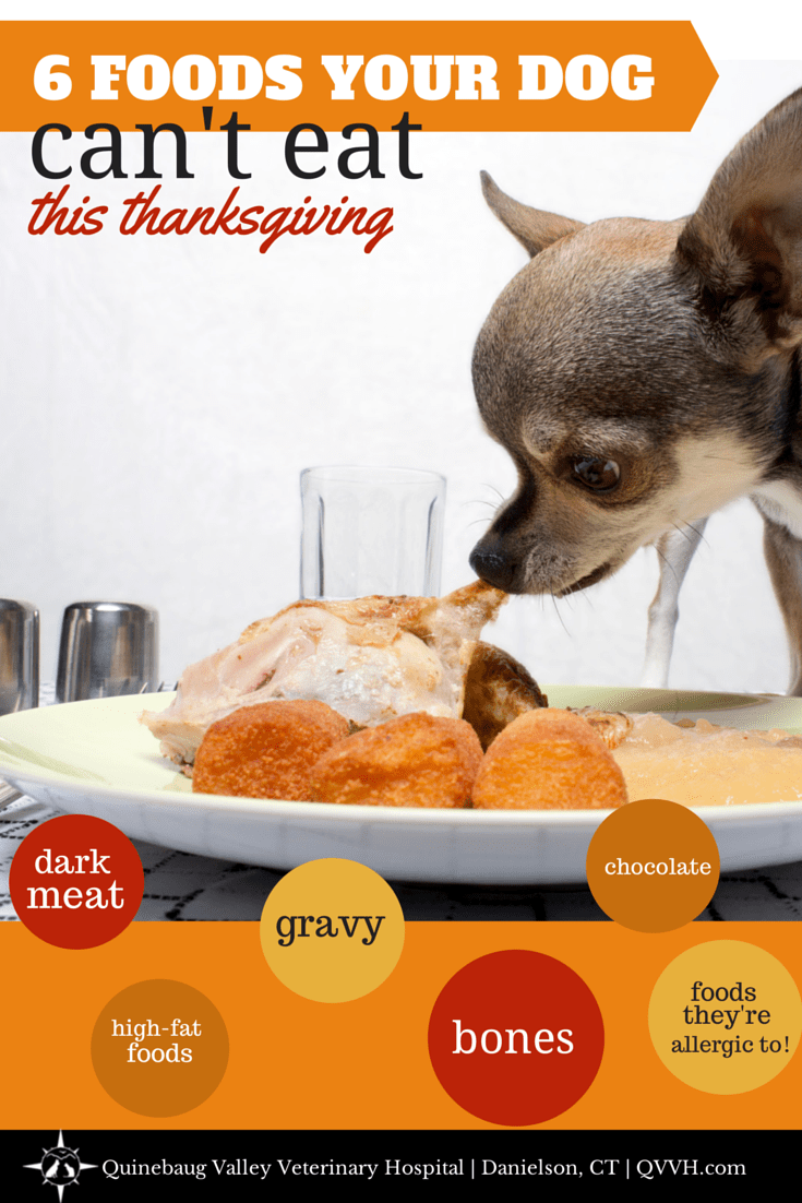 Thanksgiving foods our Connecticut veterinarian advises