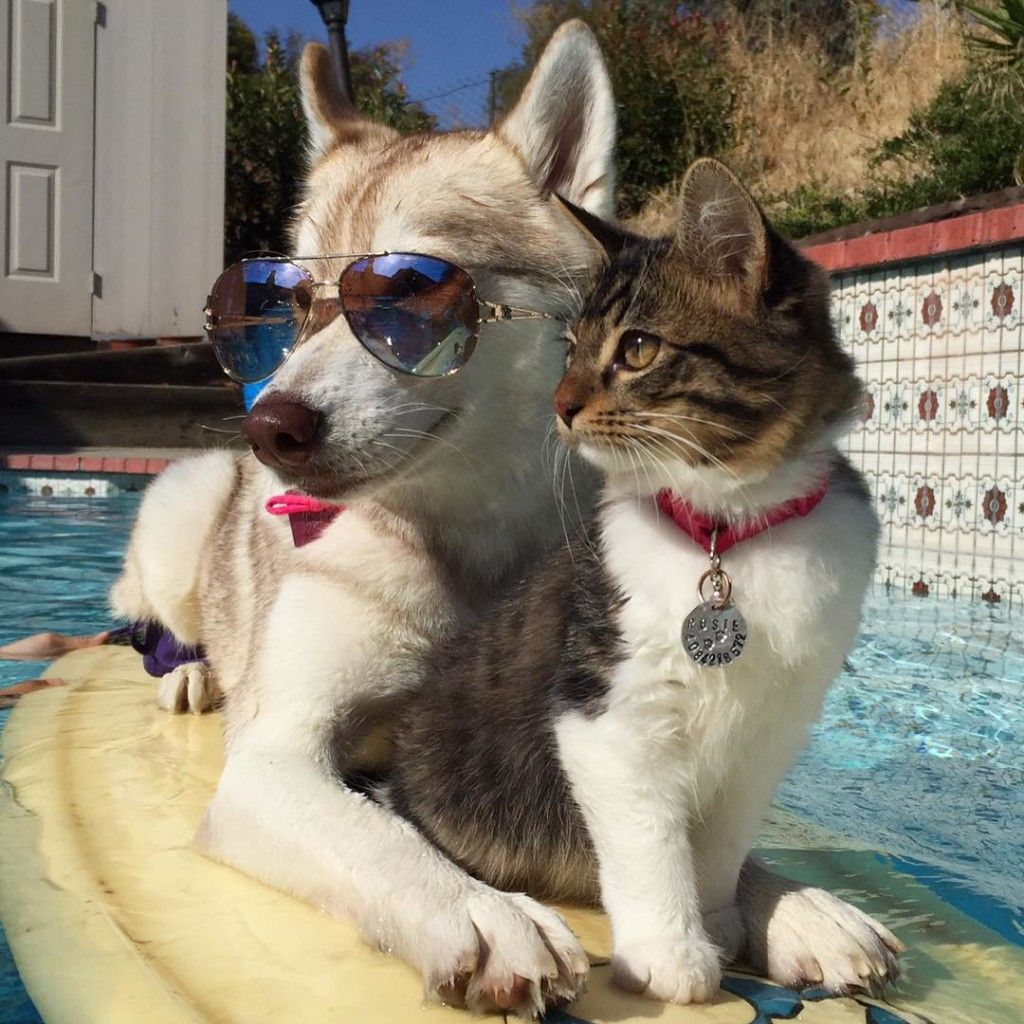 Rosie the cat and her adopted husky mom, Lilo Unbearably