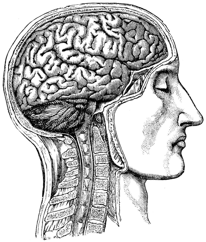 Medical Brain