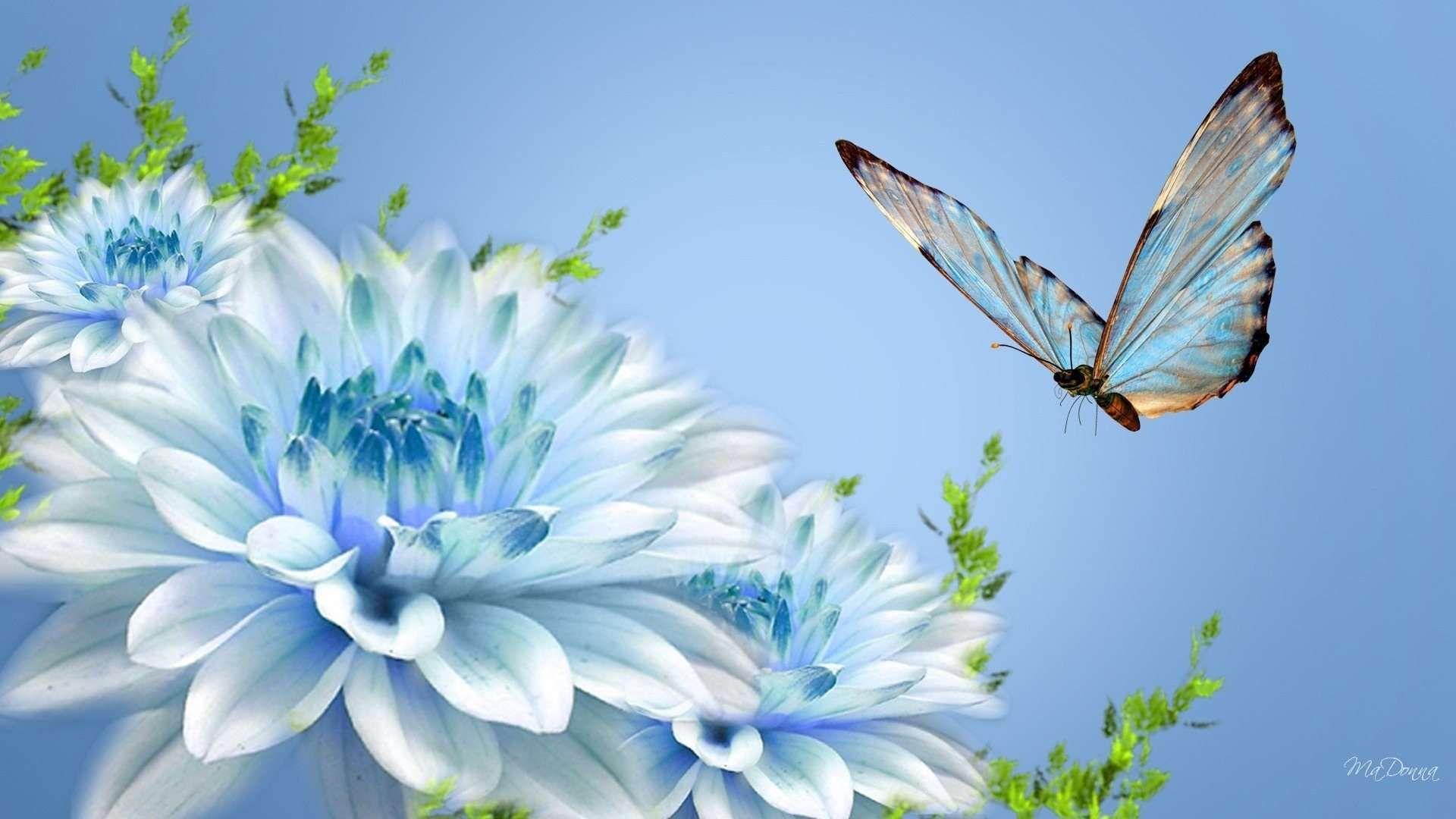 Fresh White Blue Flower Facebook Cover Photos Nature