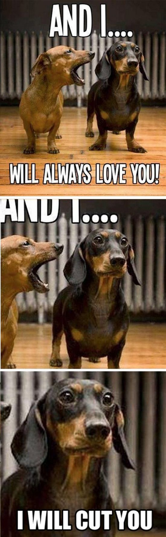 Singing Dachshund ''And I...will always LOVE YOU!... And