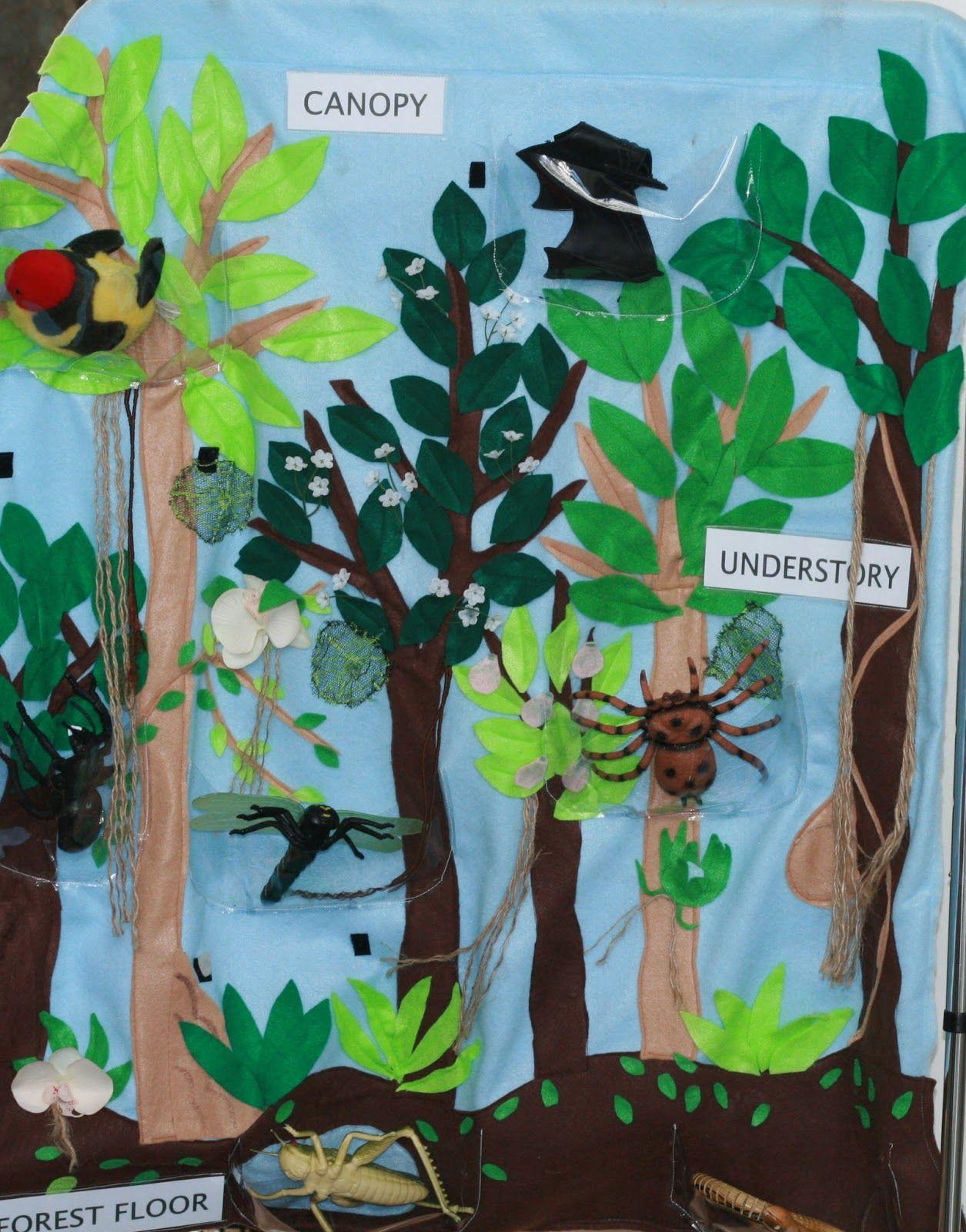 Create a rain forest diorama label the canopy, under