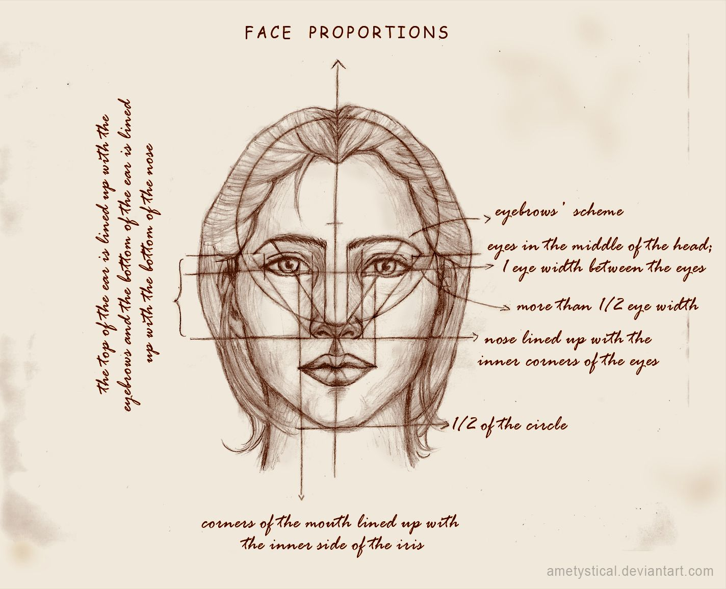 Real Face Proportions By Ametysticalviantart On Deviantart