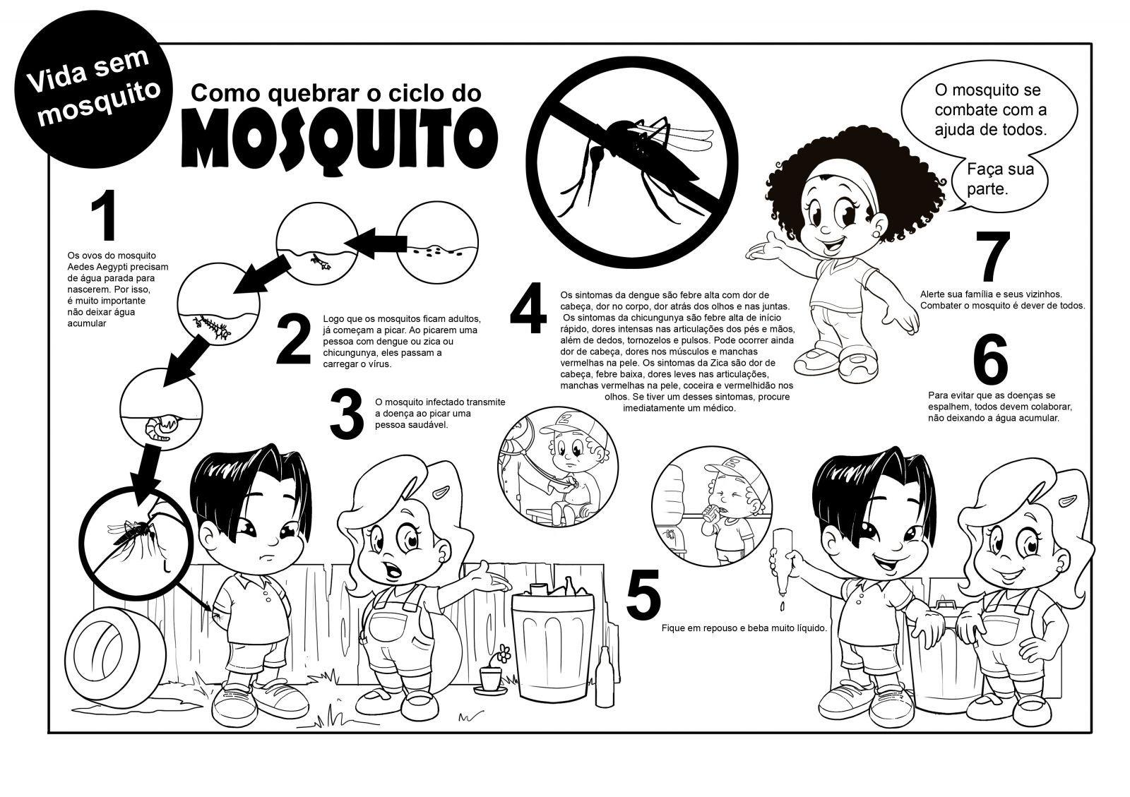 Ciclo Aedes Aegypti Para Colorir
