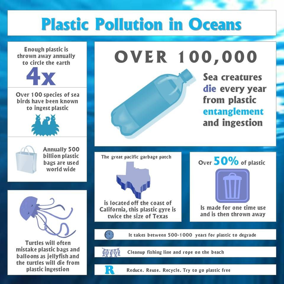 Why plastic pollution is harmful to marine wildlife! Some
