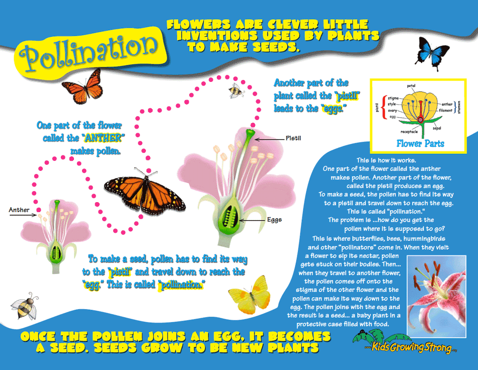 Pollination • Kids Growing Strong SHP 2017a lesson
