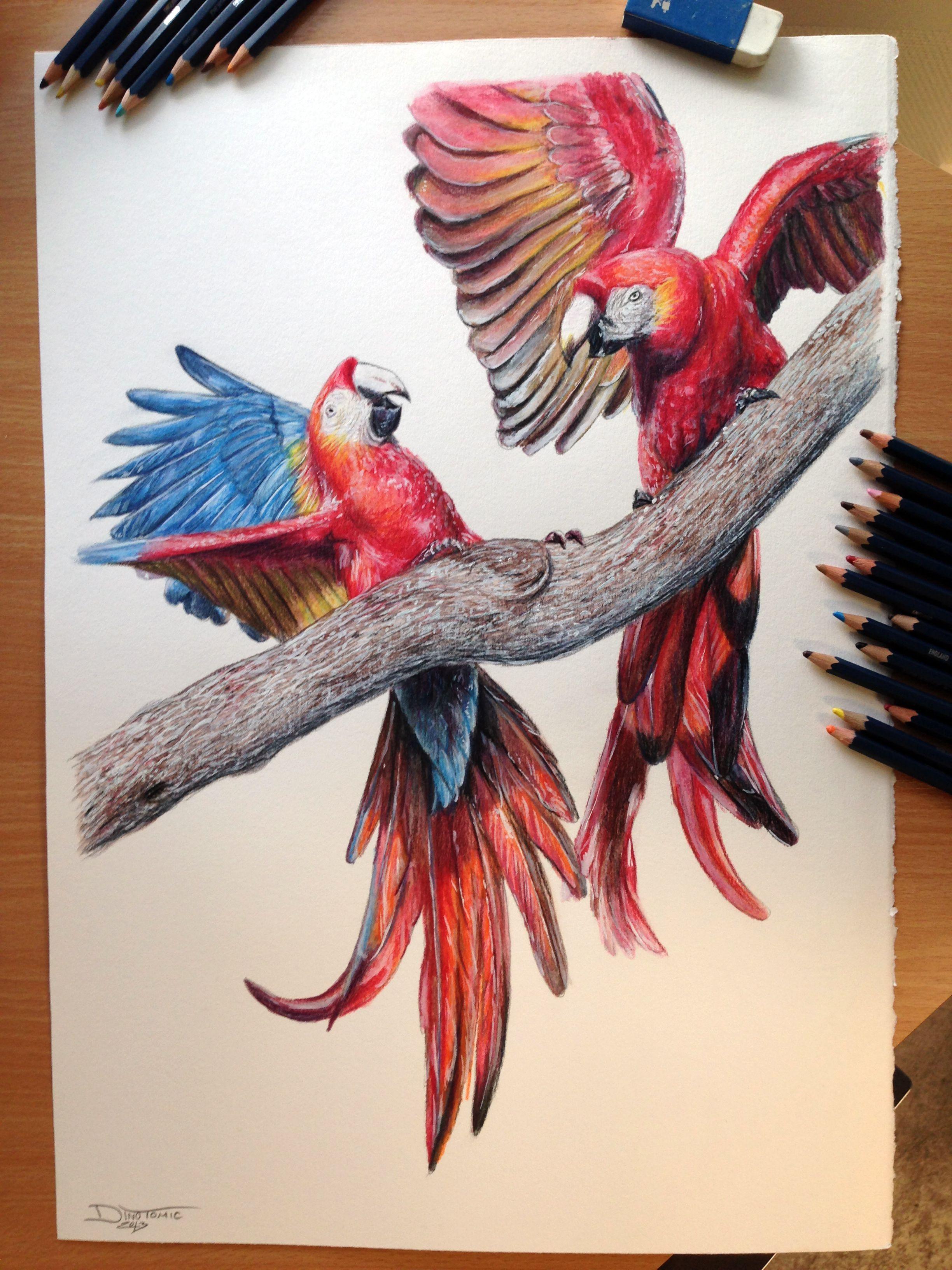 Aras Color pencil Drawing by