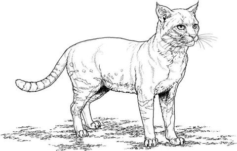 download cat coloring pages favorite cat colouring pages pinterest