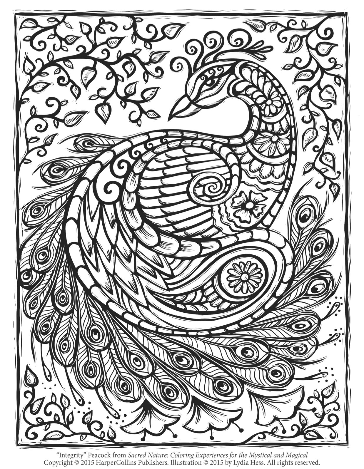 Free Peacock Adult Coloring Page Craftfoxes Downloads For