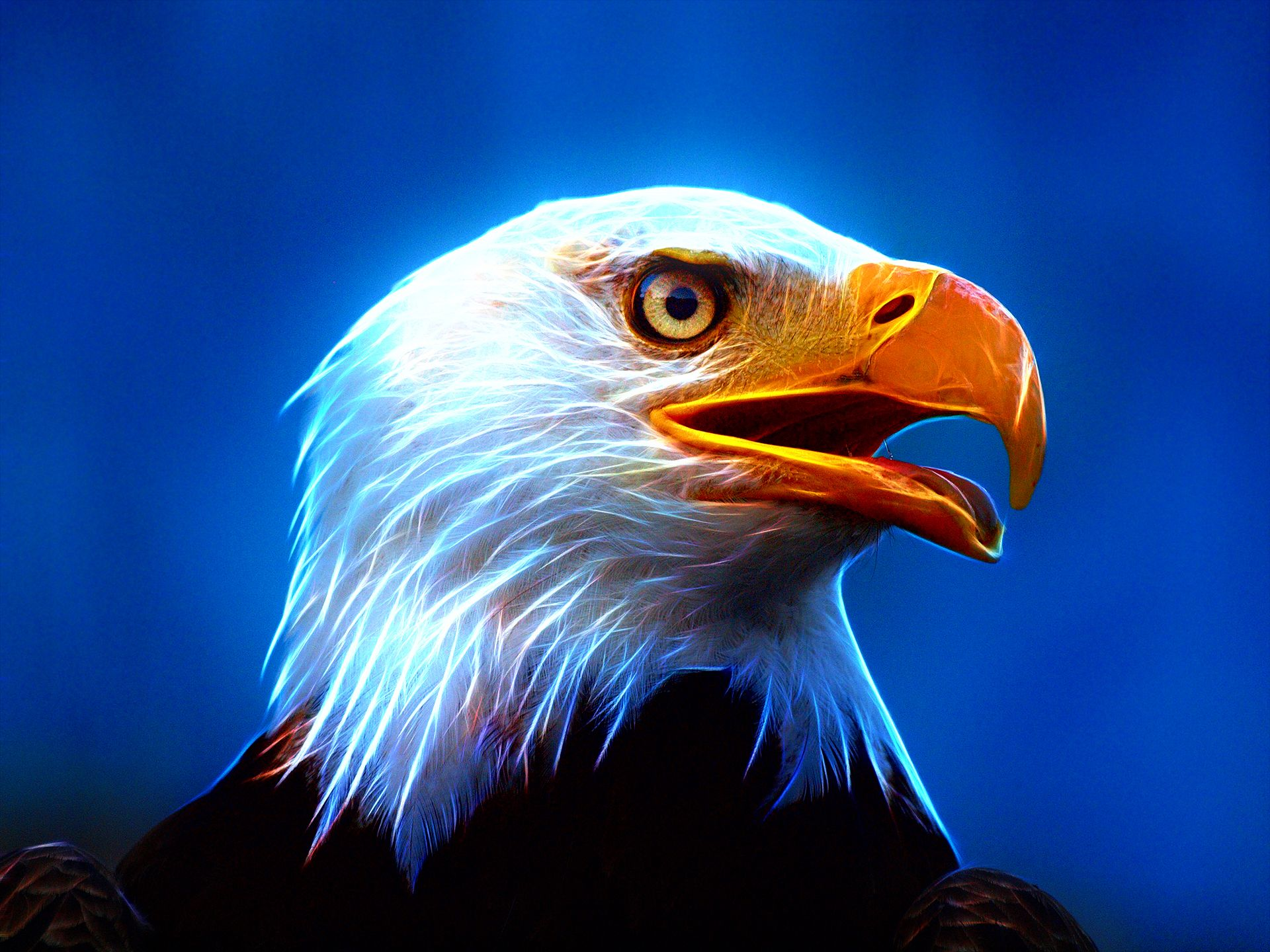 Eagle Wallpapers, Download Eagle HD Wallpapers for Free