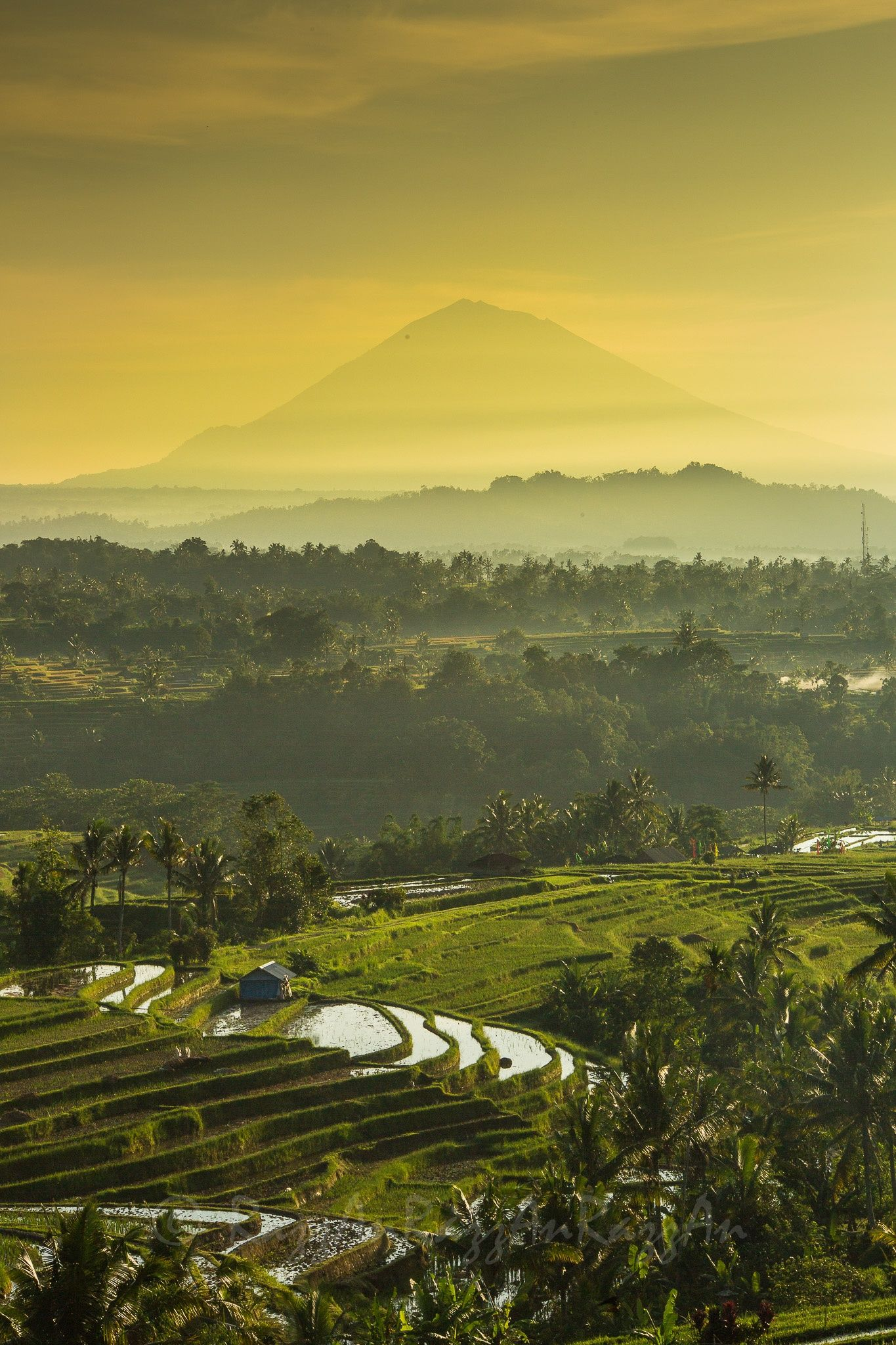 Jatiluwih, Bali For great value, zero deductible