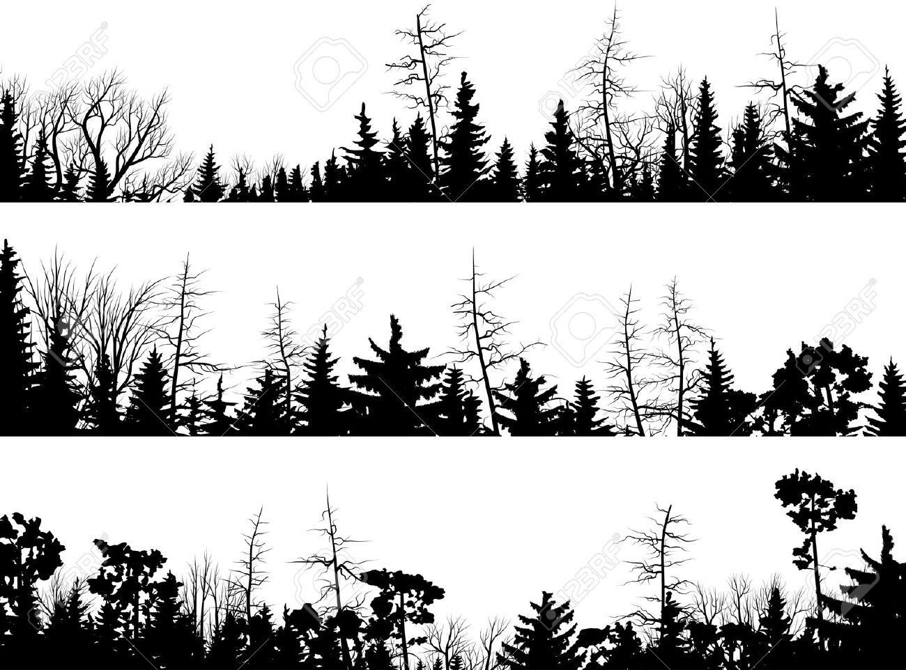 Set Of Vector Horizontal Silhouettes Coniferous Treetops