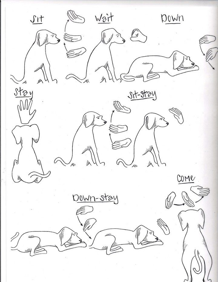 Rescue and shelter dogs freedom tails hand signs and