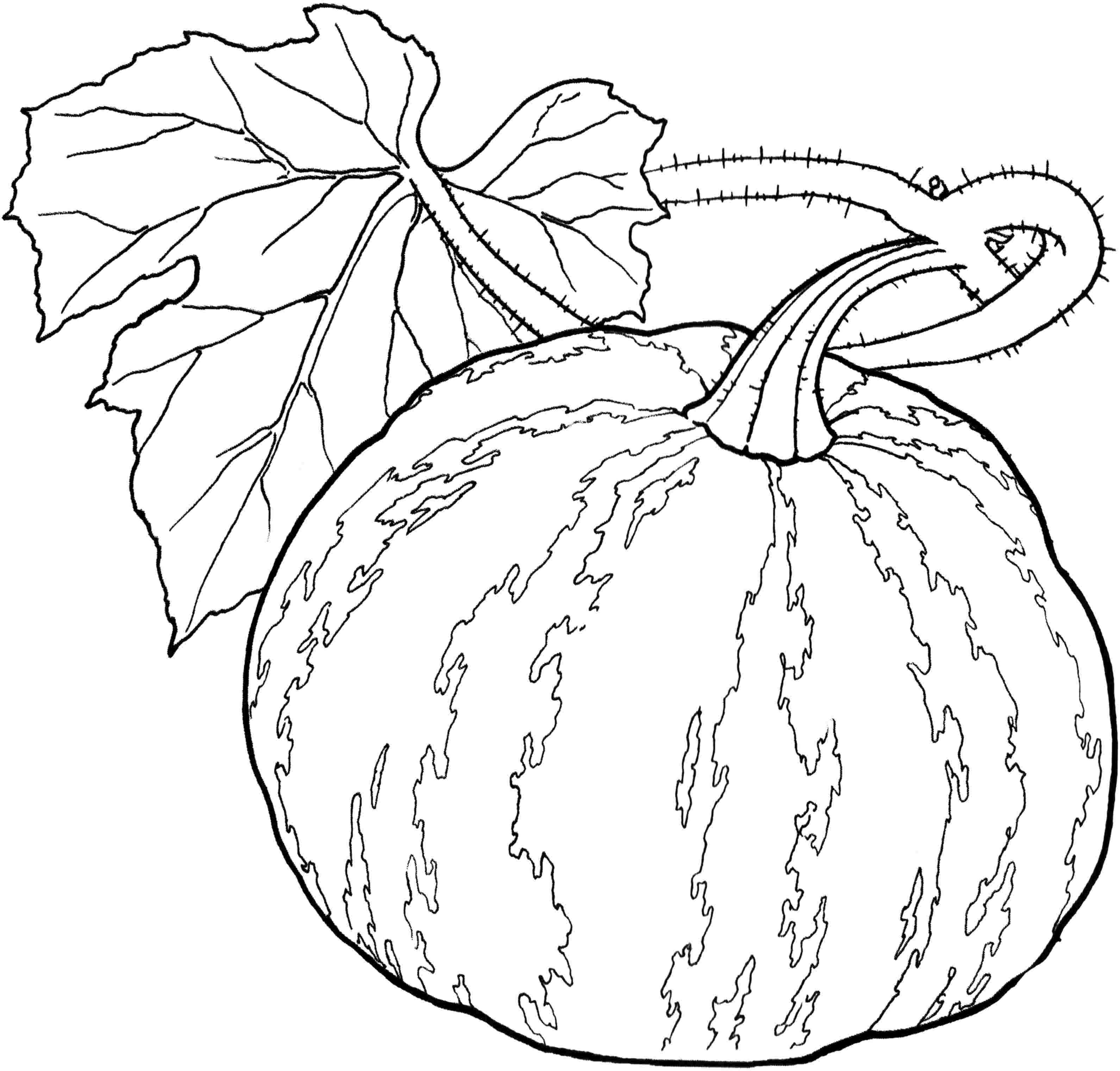 Legumes Coloriage 3