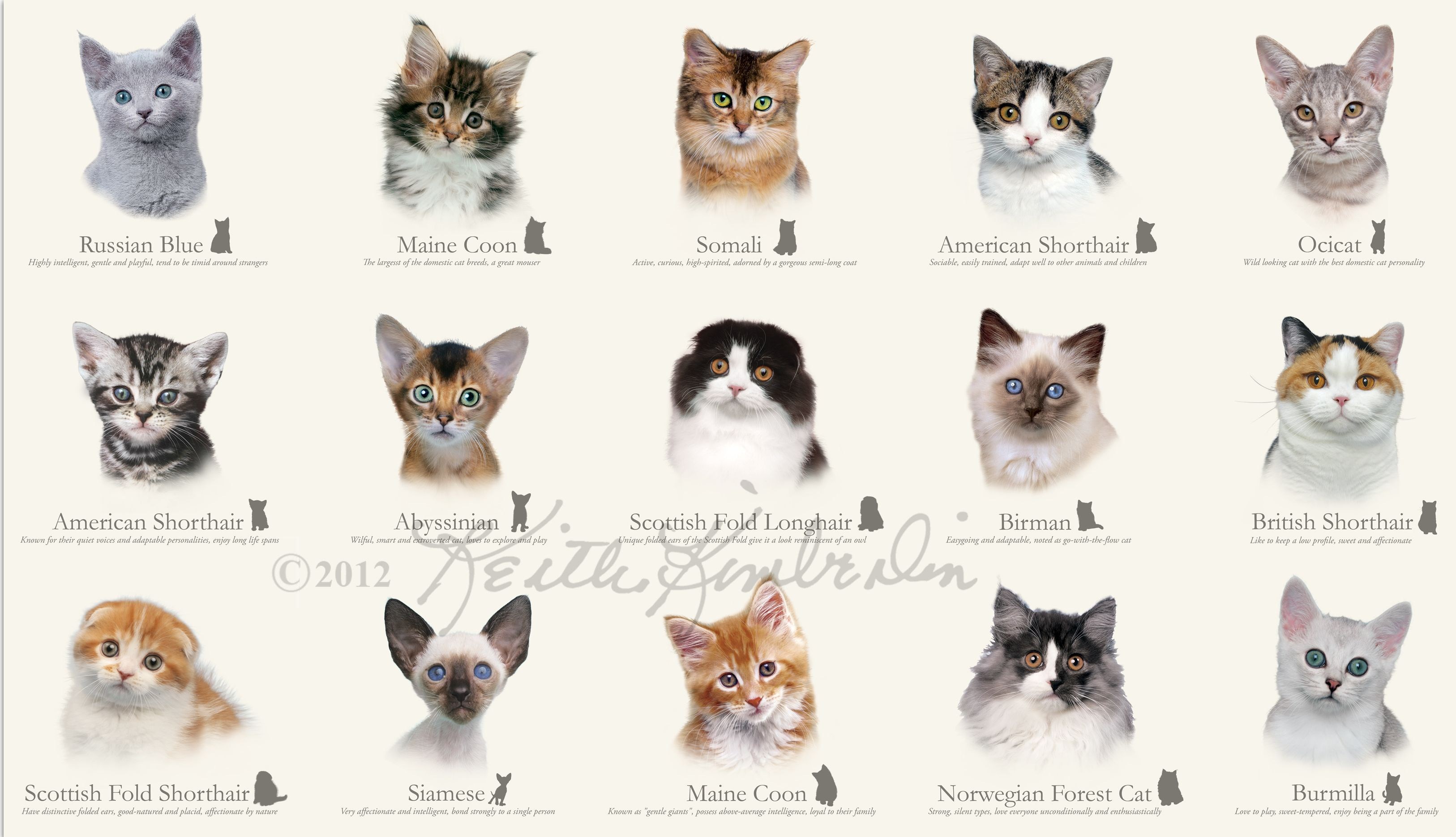 Cat Species cats there aren t nearly as many cat breeds