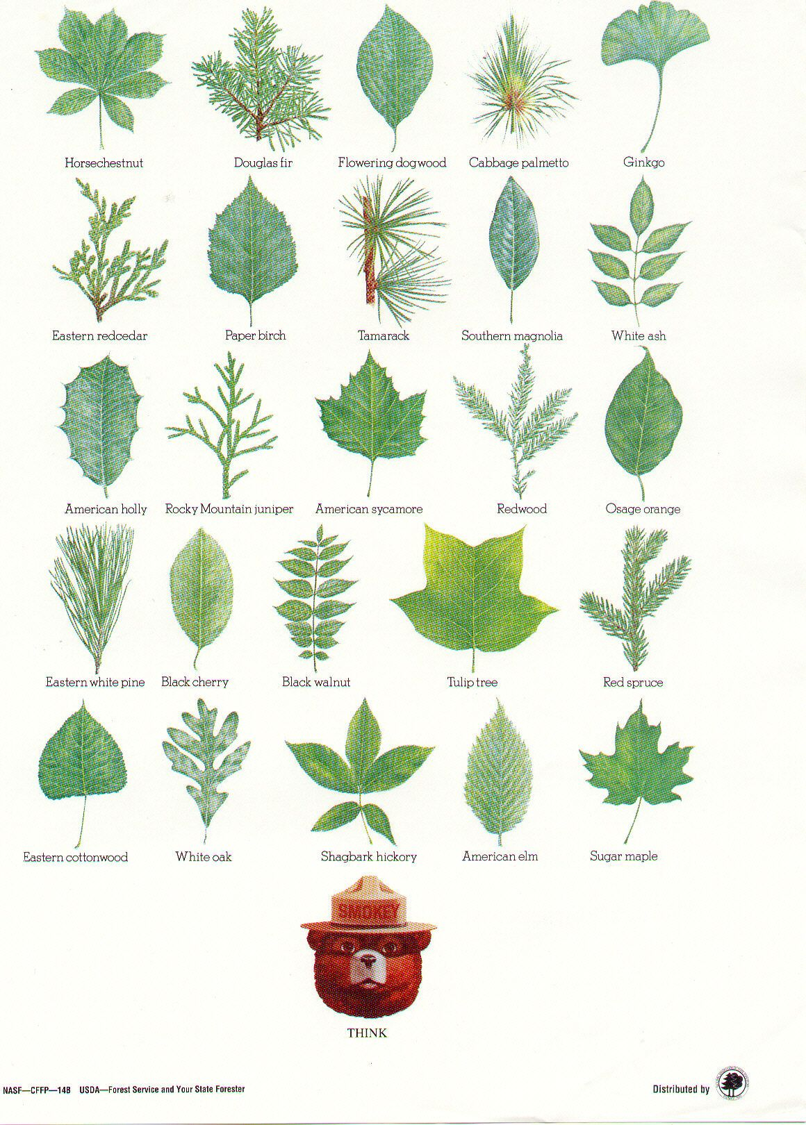 Hardwood Tree Identification By Leaf