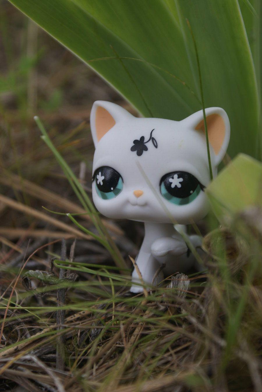 littlest pet shop cat Pets and Popcorn Pinterest So