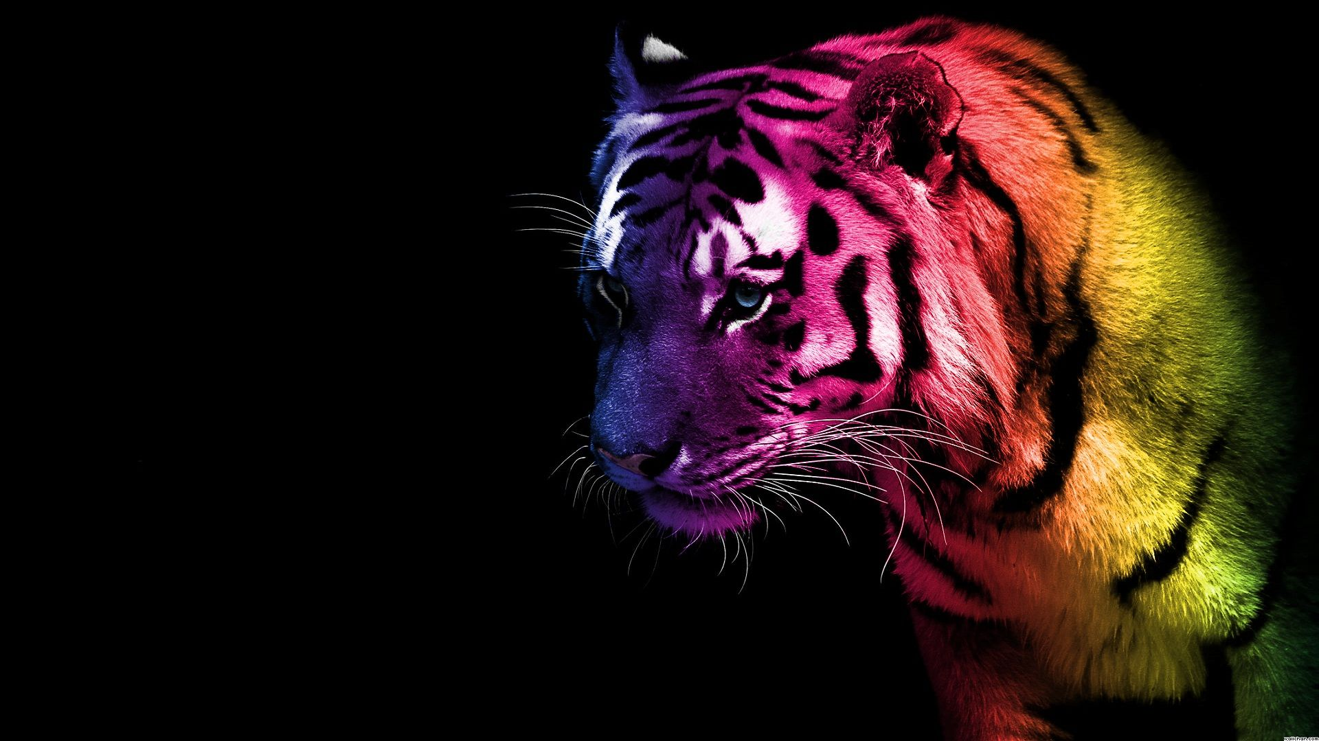 cool glow pictures Cool Tiger Glow HD Wallpaper
