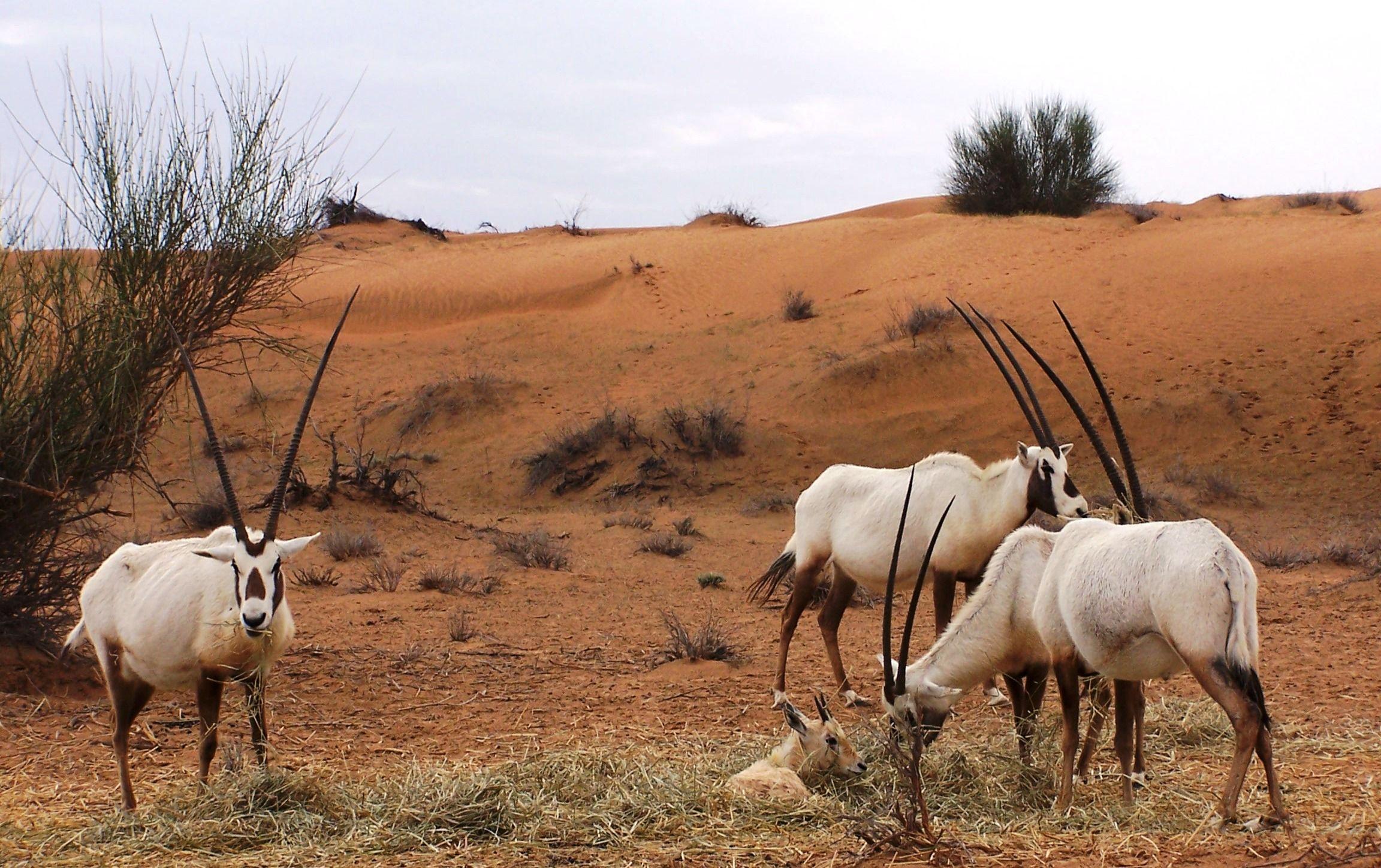 Desert Animals Flora + Fauna Pinterest Desert